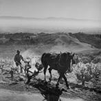 Ansel Adams, Plowing Vinyard, 1962