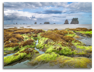 Emerald Isle, 2012