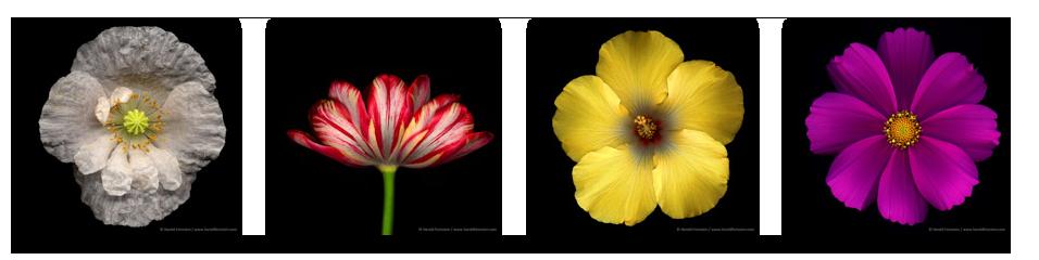 HF_Flowers_01