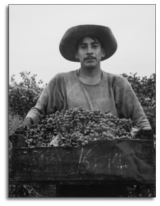 Grape Picker, 1956